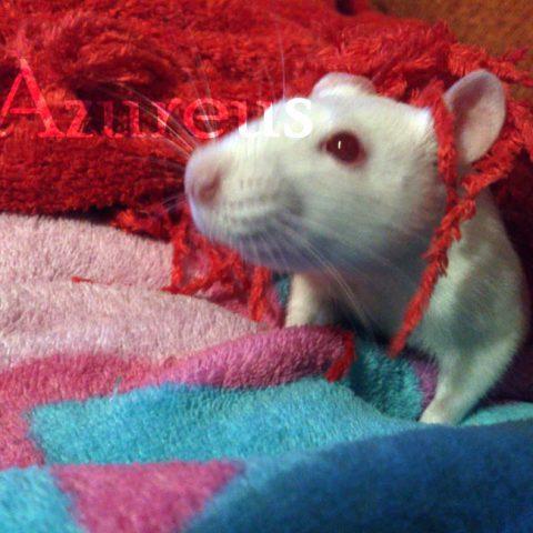 Las ratitas son exploradoras natas, y les encantan las prendas de invierno :)
