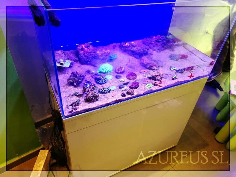 Desplazamiento de acuario de 180 litros para eliminar humedades de las paredes y cambiar de ubicación el cableado.